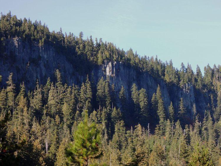 Mt. Rainier - forest near Longmire historic district