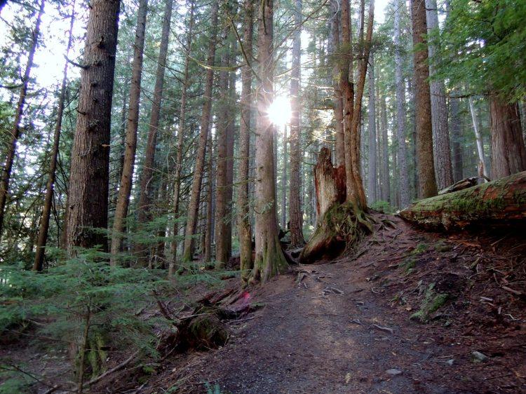 Mt. Rainier forest, Trail of the Shadows