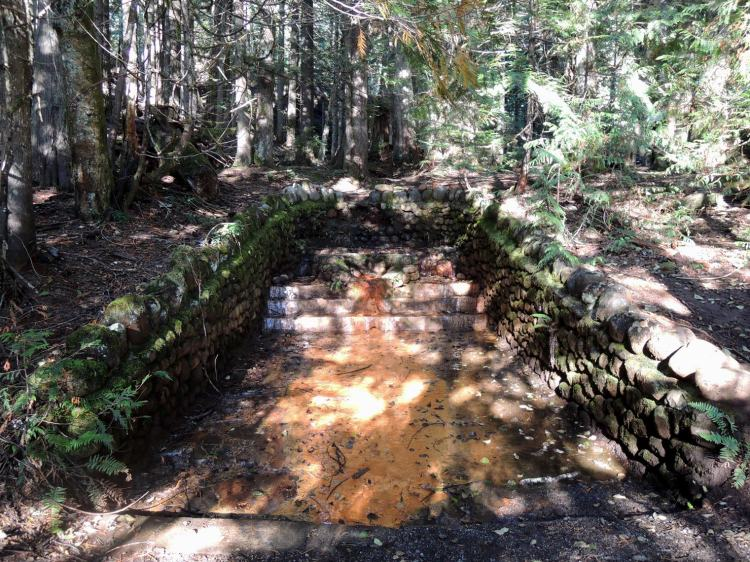 Mt. Rainier mineral spring, Trail of the Shadows