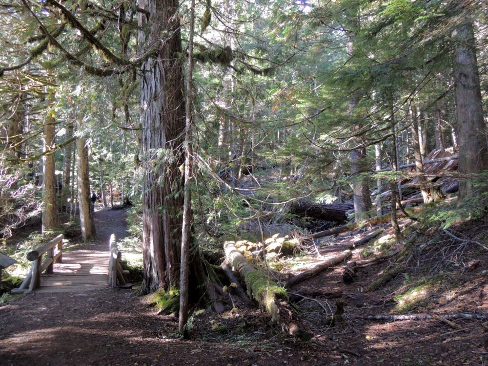 Mt. Rainier's Trail of the Shadows